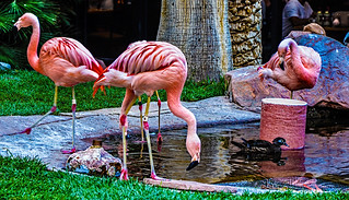 The Wildlife Habitat - Flamingo Hotel & Casino Las Vegas | by TDelCoro