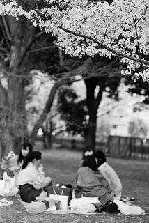 昭和紀念公園_14 | zeiss ikon rf+leica elmarit m 90/2.8+fujifilm