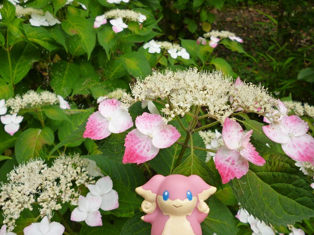 audino in fukagawa tokyo 227 kiyosumi garden kasadera flickr