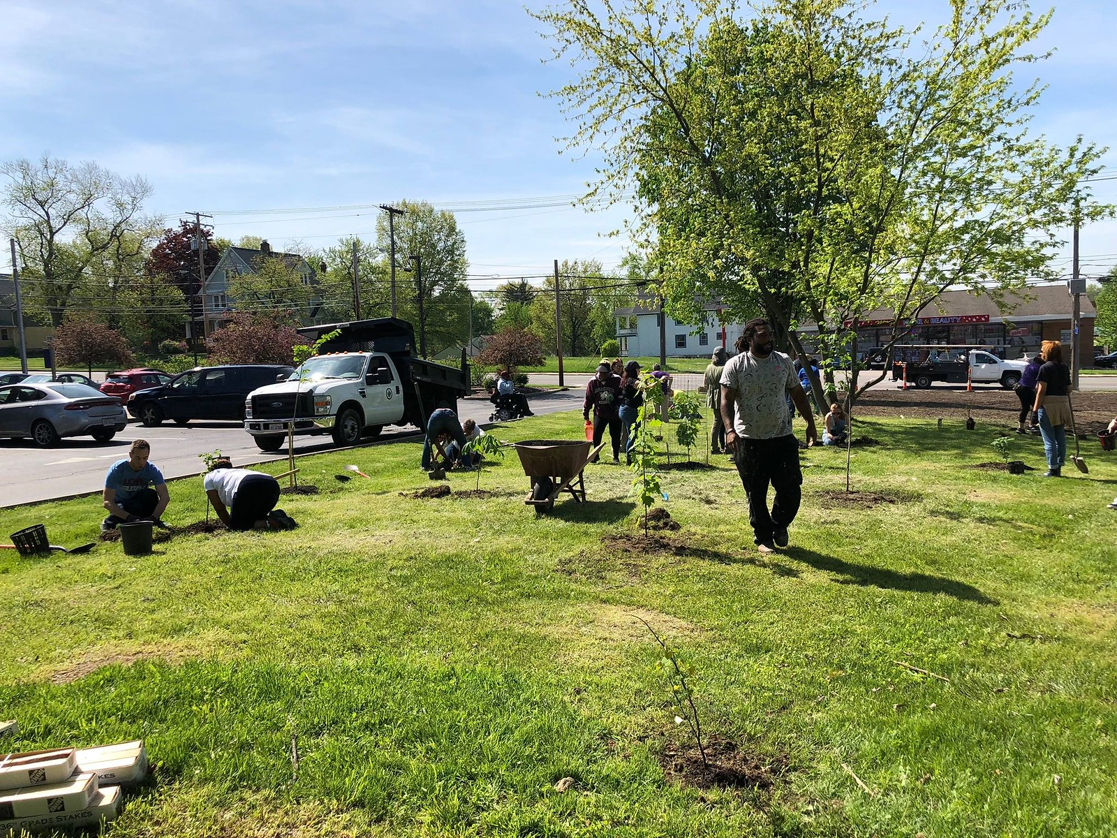 Maple Heights Planting