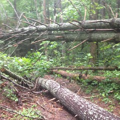 Downed Trees on P5