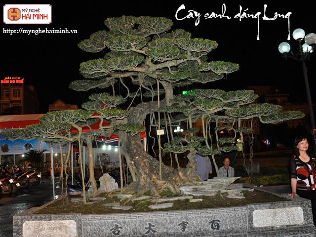 Cay sanh dang long mynghehaiminh CAY0001m