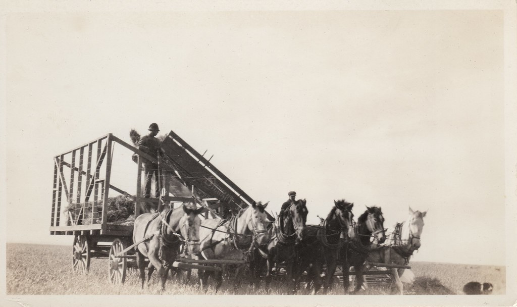team of six horses pulling stewart steaf loader unknown da flickr