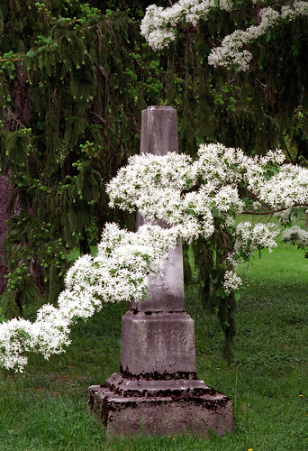 "Cincinnati - Spring Grove Cemetery & Arboretum ""Springtime Over Obelisk"" 