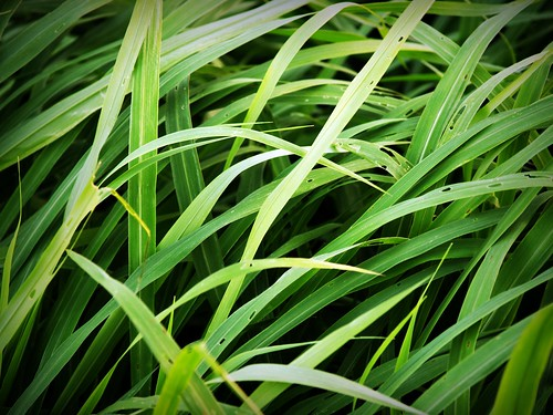 Grass Background | by www.icon0.com