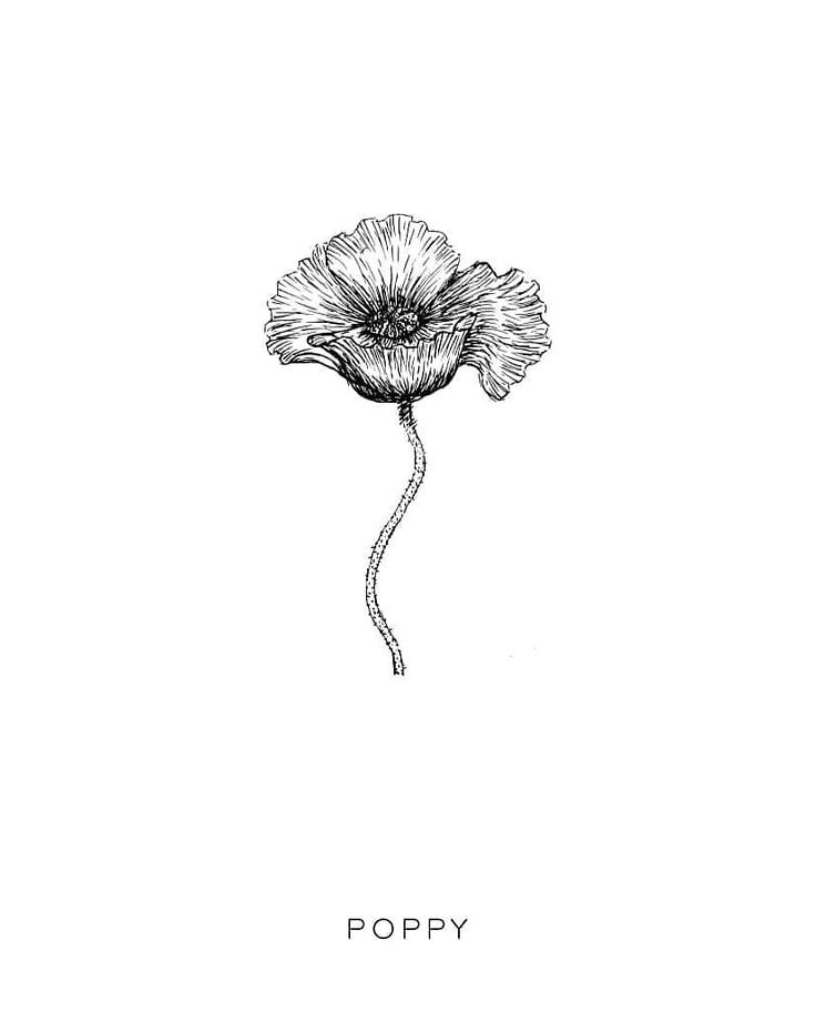Flowers drawings inspiration p o p p y flower drawing flickr flowers drawings inspiration p o p p y flower drawing flower botanical illustration botanical line drawi mightylinksfo