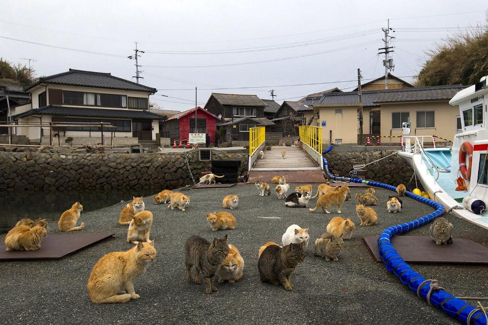Остров кошек Аошима фото