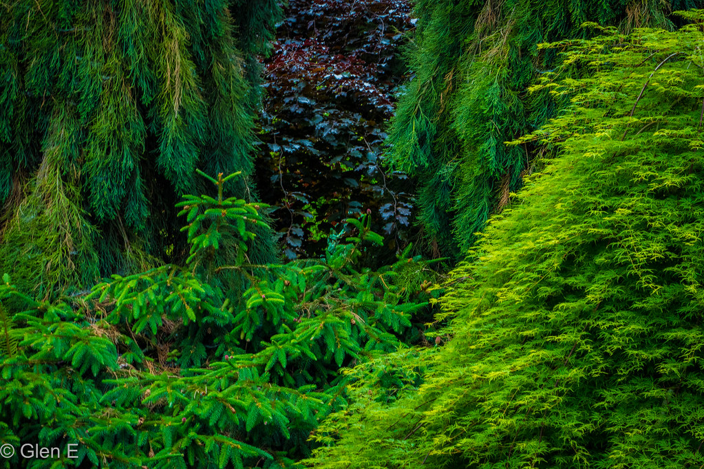 Oregon Gardens Resort | Silverton, Oregon | nebulous 1 | Flickr