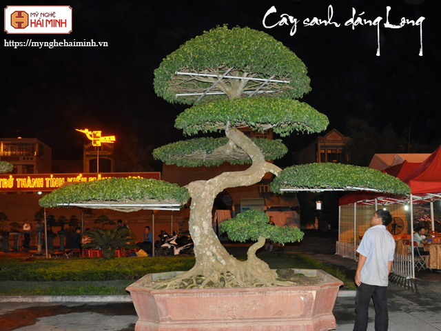 Cay sanh dang long mynghehaiminh CAY0001n