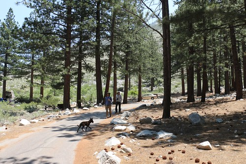 0068 We left the car at our campsite in the Big Pine Creek Campground and took a day-hike to First Falls | by _JFR_