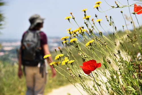 Andy and wild flowers, Moinho route, Palmela | by BuzzTrips
