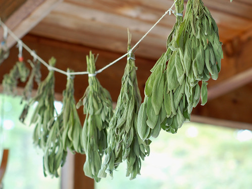 Drying fresh sage by Eve Fox, The Garden of Eating blog, copyright 2013 | by Eve Fox