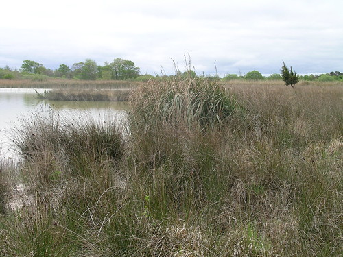 Fen vegetation with black bog rush and taller saw sedge | by Irish Ramsar Wetlands