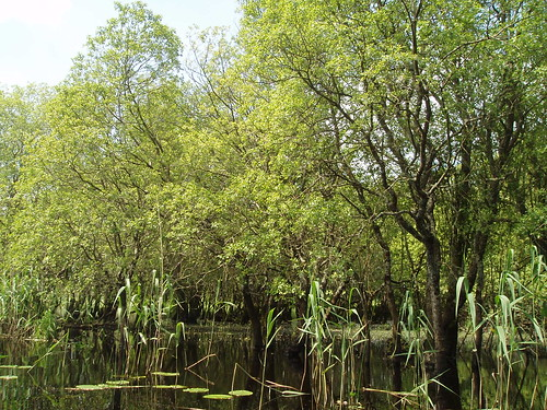 Other wet woodland with willows and reeds | by Irish Ramsar Wetlands