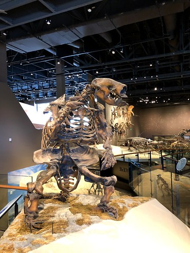 Giant sloth skeleton | by gmeador