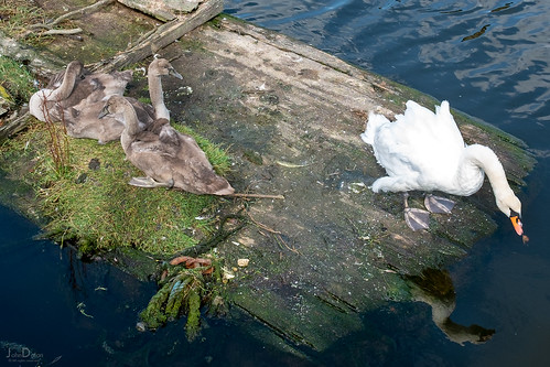 family life | leith | scotland | by John FotoHouse