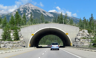 banff wildlife crossing overpass | by quirkytravelguy