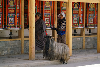 Praying with goat - Xiahe - China | by Sjak11