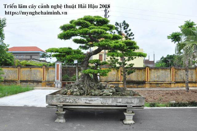 trien lam cay canh haihau CAY2018 41