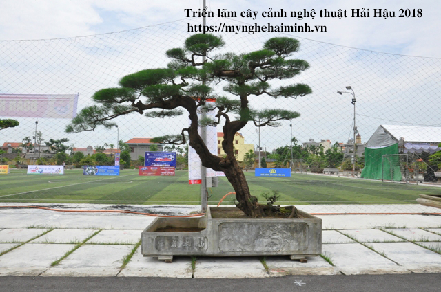 trien lam cay canh haihau CAY2018 19