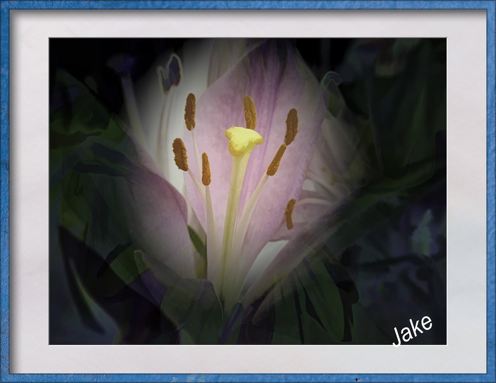 Lily By Moonlight Created And Textured In Topaz Studio John