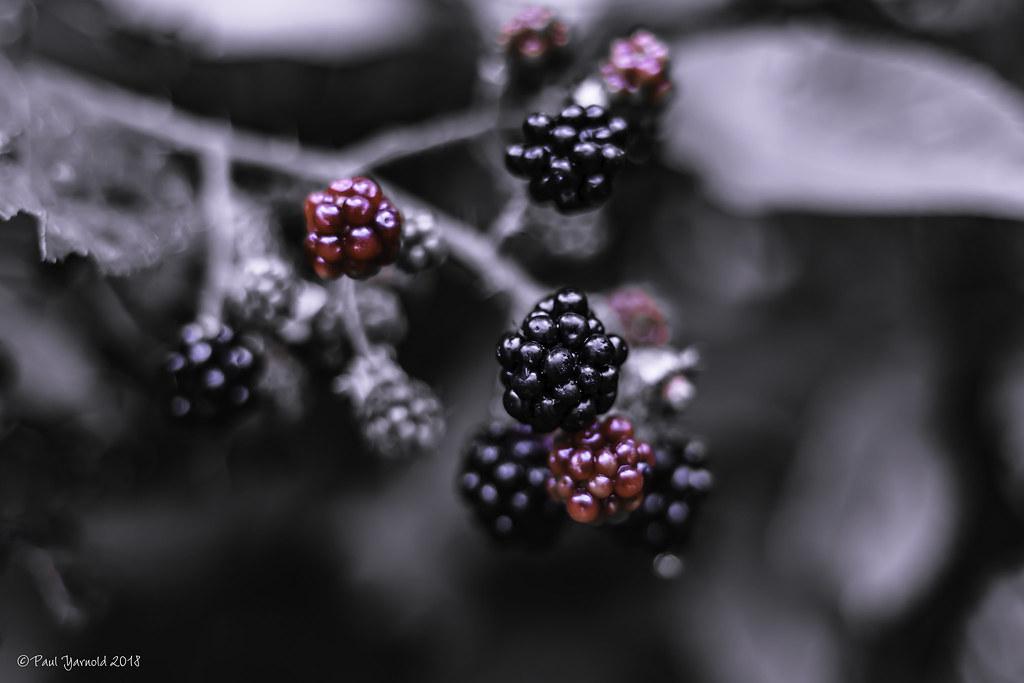 blackberries before bed