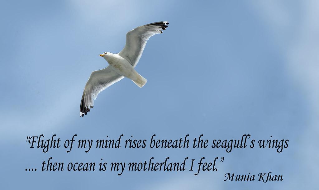 Munia Khan Quotes Seagull Flight Of My Mind Rises Beneath Flickr