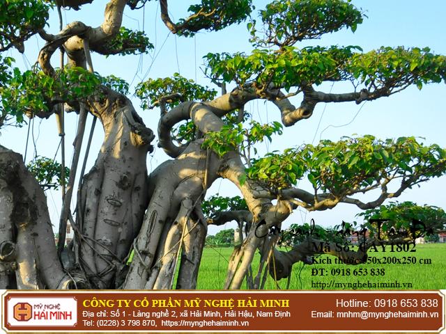 Cay Sanh Dang Tam Da mynghehaiminh CAY1802c