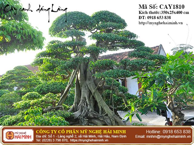 Cay Sanh Dang Lang mynghehaiminh CAY1810b