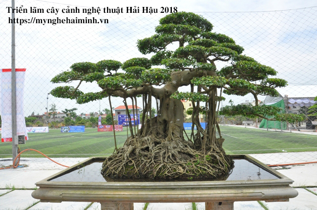 trien lam cay canh haihau CAY2018 20