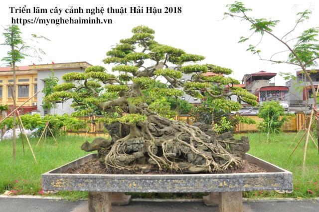 trien lam cay canh haihau CAY2018 17