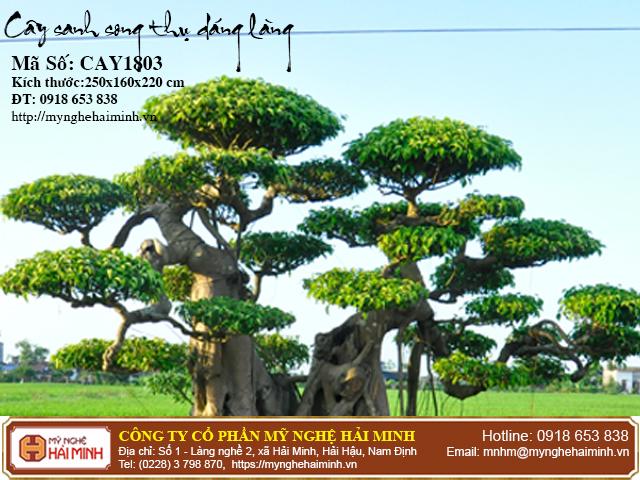 Cay Sanh Song Thu Dang Lang CAY1803b