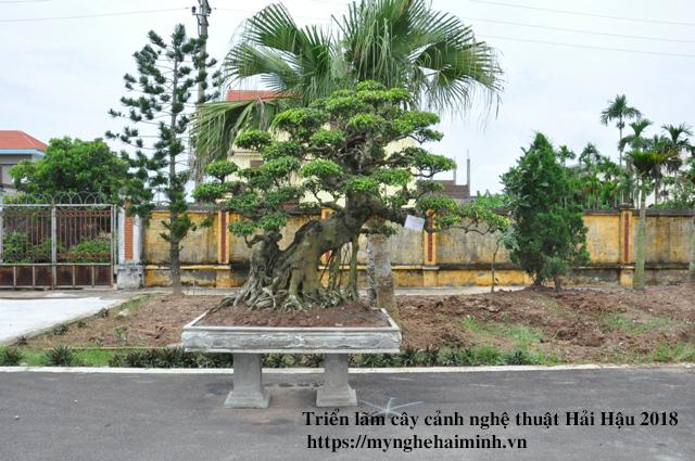 trien lam cay canh haihau CAY2018 39