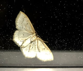 Moth in the window | by Mary P Madigan