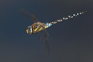 Migrant Hawker | by Stephen B53