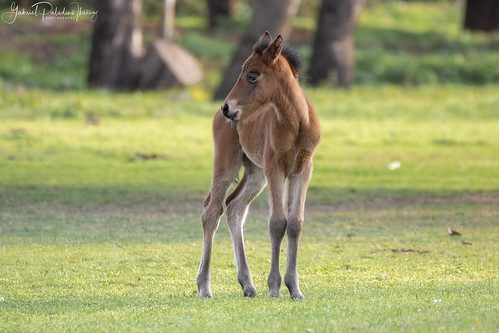 Little foal | by Gabriel Paladino Photography