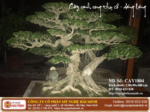 Cay Sanh Song Thu Co Dang Lang CAY1804a