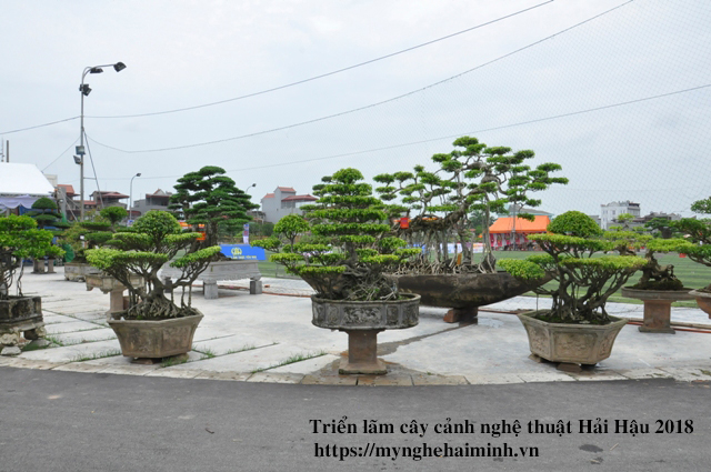 trien lam cay canh haihau CAY2018 36
