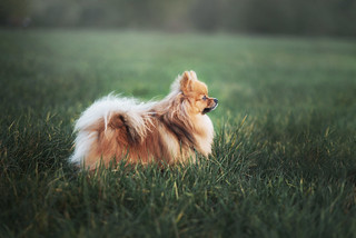 Dans l'herbe - Murphy | by TheLittlePaws