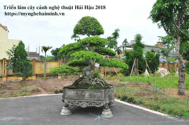 trien lam cay canh haihau CAY2018 38