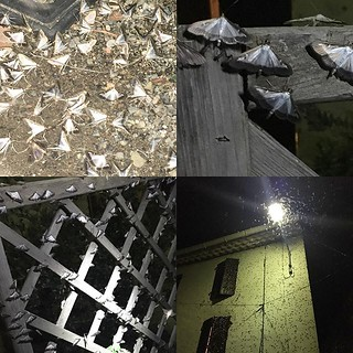 The plague of #moths in #babeaubouldoux continues! | by jonworth-eu