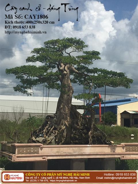 Cay Sanh Co Dang Tung mynghehaiminh CAY1806a