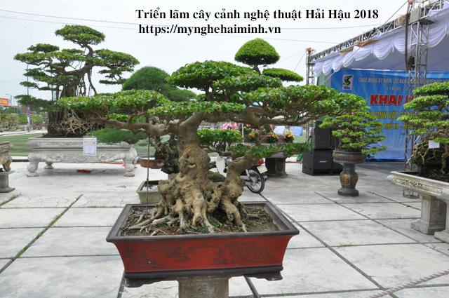 trien lam cay canh haihau CAY2018 23