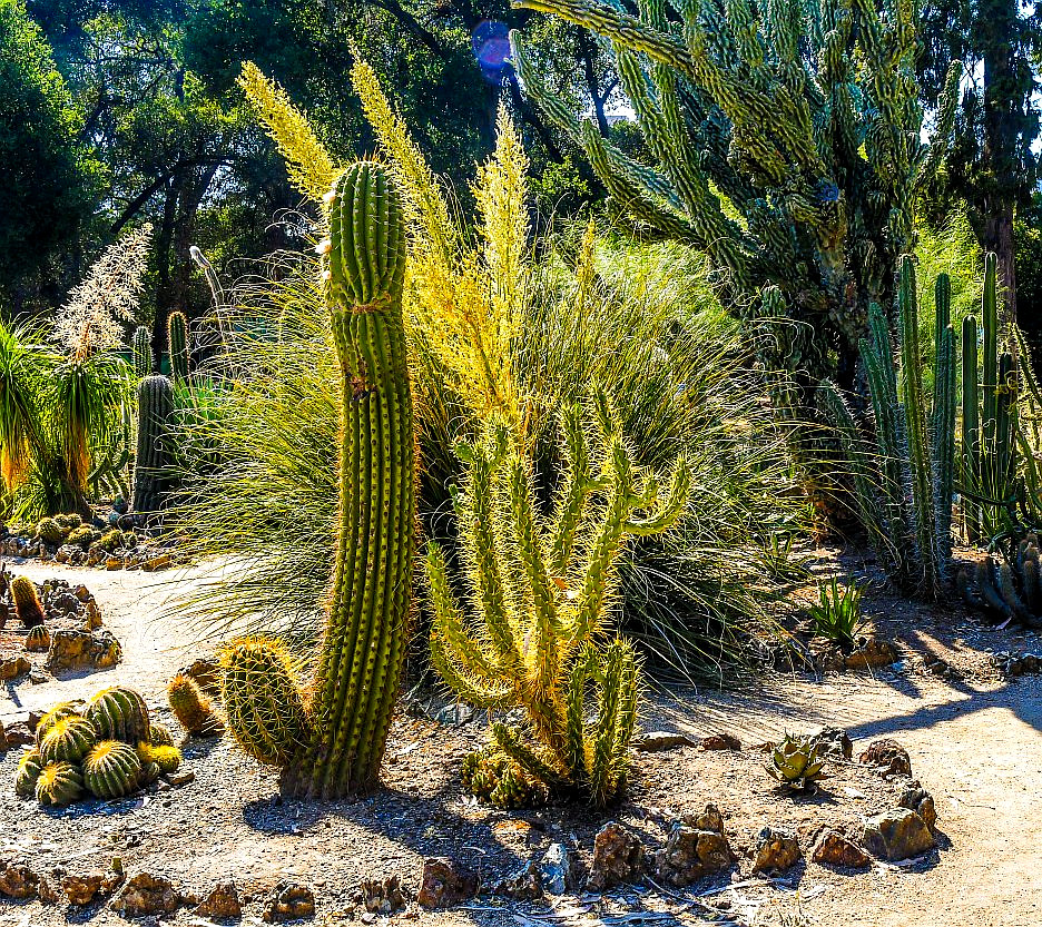 Delicieux ... Arizona Cactus Garden At Stanford University | By Jacklouis17
