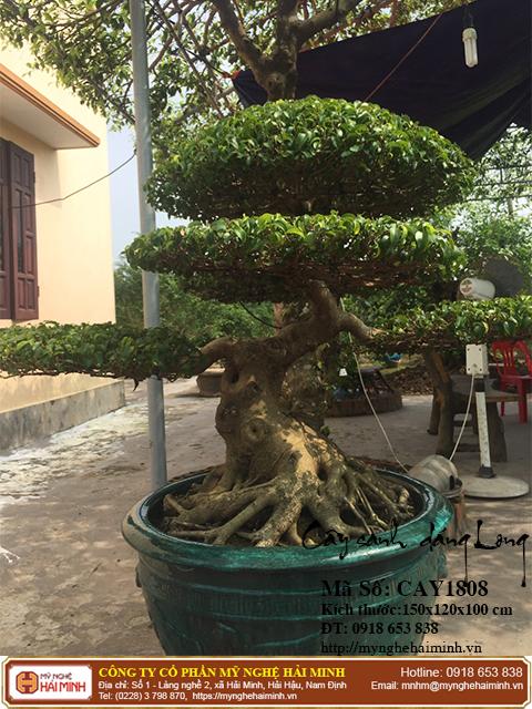 Cay Sanh Dang Long mynghehaiminh CAY1808b