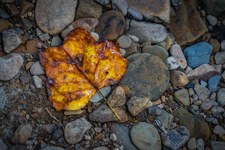 Lone Colorful Leaf Along the Bank of Linn Run | by John Brighenti