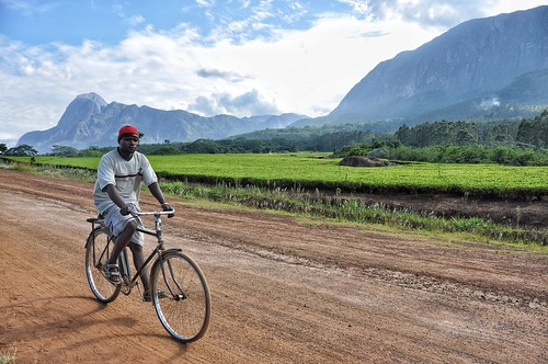 Cyclist beside Mount Mulanje and tea plantations. | by Peter Gostelow