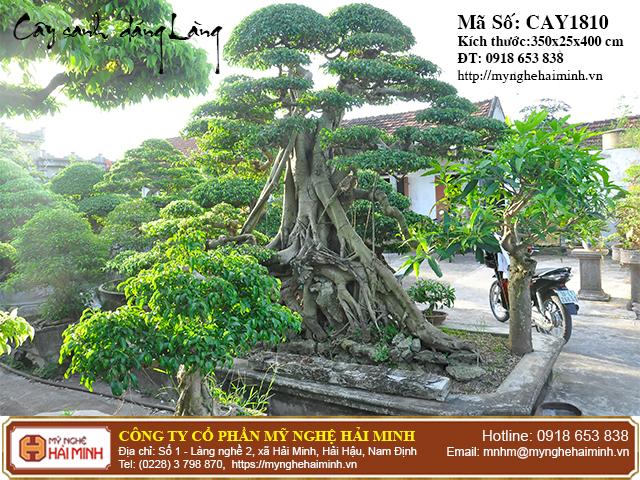 Cay Sanh Dang Lang mynghehaiminh CAY1810a