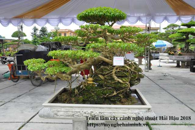 trien lam cay canh haihau CAY2018 26