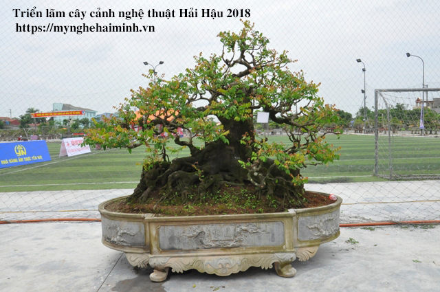 trien lam cay canh haihau CAY2018 30